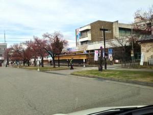 八重の桜♪ 大河ドラマ館