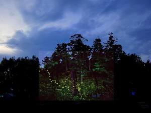 幻想的に夏の夜を彩るホタルの舞い