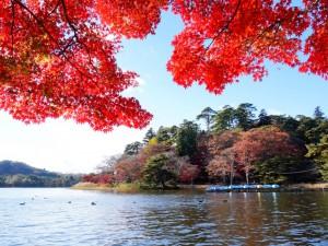 13036南湖公園の紅葉